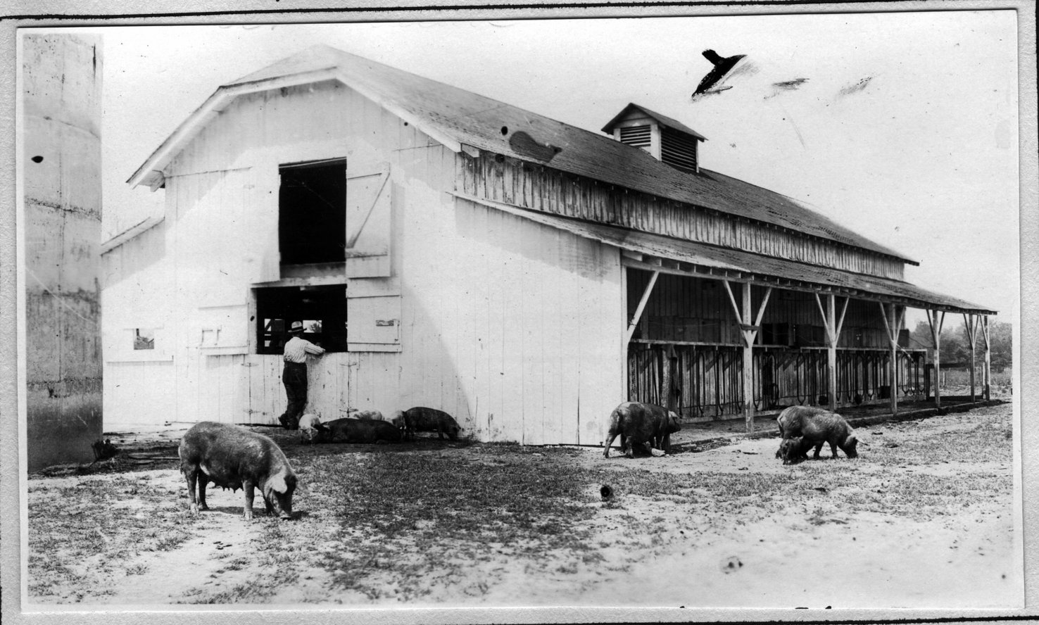 114~Mrs. A. R. Phelan Barn Aug 1920.jpg
