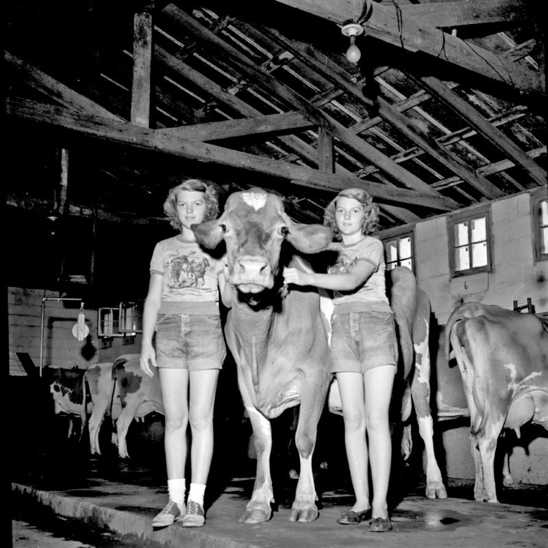 034_Here's the bell cow. (undated).jpg