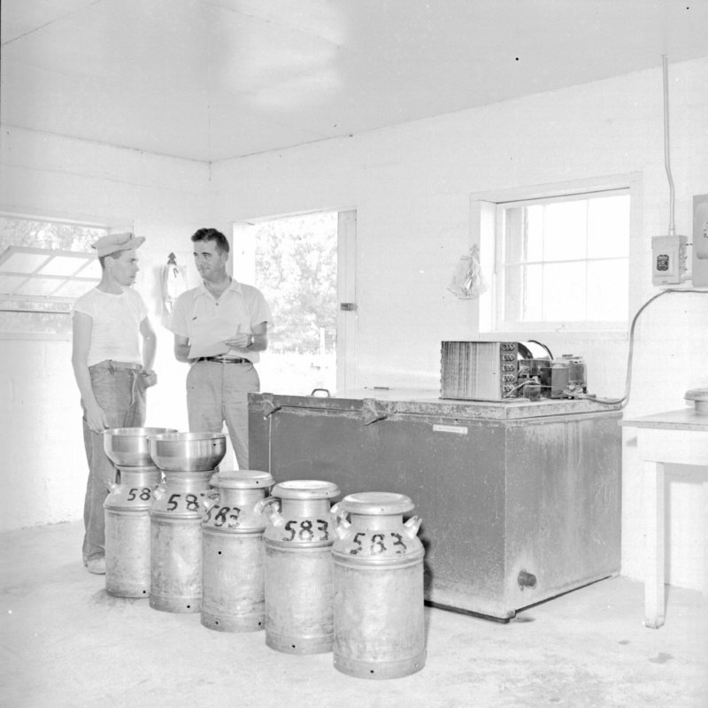 042_Some farmers poured the milk into cans... (1951).jpg