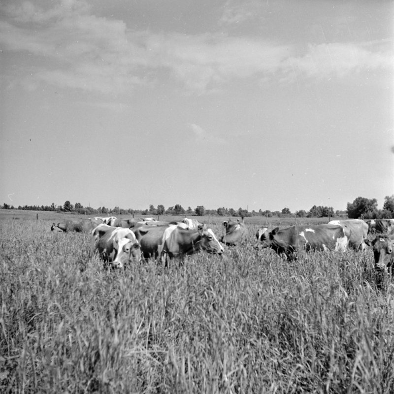 112_or grow grass for grazing faster. (1951).jpg